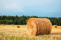 Straw Bales. Harvested straw bales in a sunny day Royalty Free Stock Photo