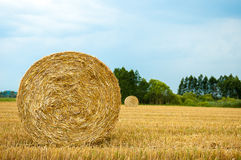 Straw Bales. Harvested straw bales in a sunny day Royalty Free Stock Image