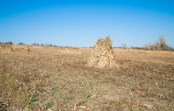 Straw bales on a harvested wheat field Royalty Free Stock Photography