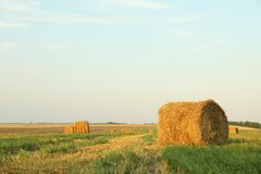 Straw bales of hay in the stubble field stock photo
