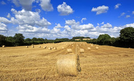 Straw bales in Irish countryside, Ireland, Europe. Stock Image