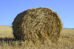 Straw bales. Large round straw roll with blue sky in background Stock Photo