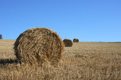Straw bales. Large round straw roll with blue sky in background Stock Images