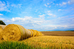 Straw bales in the meadow Royalty Free Stock Photos