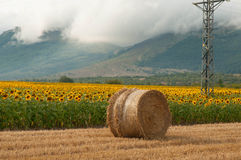 Straw bales in the newly harvested fields and sunflowers Royalty Free Stock Photos