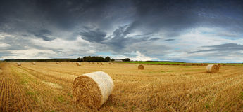 Straw bales pano Stock Photo
