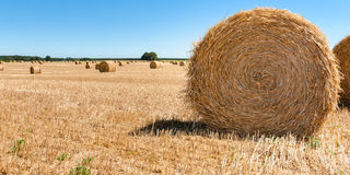 Straw bales at the Pays de la Loire, France. Hay bales on the field after harvest.. Round hay or straw bales in in countryside. Agriculture field after harvest stock image