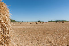 Straw bales at the Pays de la Loire, France. Hay bales on the field after harvest.. Round hay or straw bales in in countryside. Agriculture field after harvest royalty free stock photo