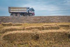 Straw bales on rice field. Stock Photo