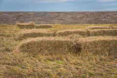 Straw bales on rice field. Royalty Free Stock Photos