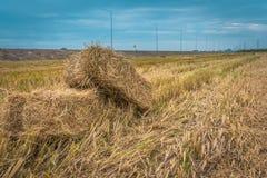 Straw bales on rice field. Stock Photos