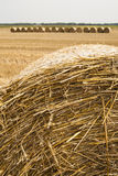 Straw bales rolled up, the crop stubble. Stock Photo