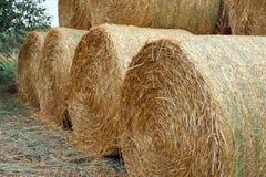 Straw bales. Stock Image
