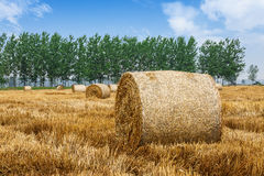 Straw bales Scenery in the country farm Stock Image
