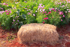 Straw bales seating Royalty Free Stock Images