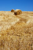 Straw bales among stems royalty free stock photos