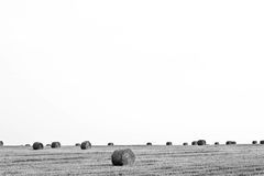 Straw bales in stubble field