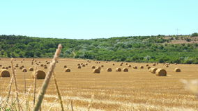 Straw bales in summer stock video