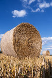 Straw bales in summer Stock Photo