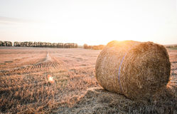Straw bales in the summer evening on the field. Royalty Free Stock Photography