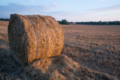 Straw bales in the summer evening on the field. Stock Images