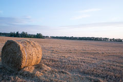 Straw bales in the summer evening on the field. Stock Photography