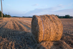 Straw bales in the summer evening on the field. Stock Image