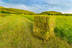Straw bales in summer on a field Stock Image