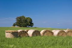Straw bales, trees and meadow. Round straw bales in the meadow and blue sky Royalty Free Stock Photos