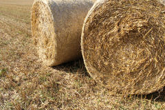 Straw bales on the  wheat fields Royalty Free Stock Image
