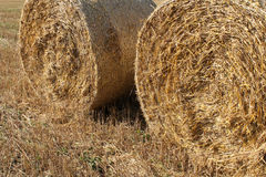 Straw bales on the  wheat fields Stock Image