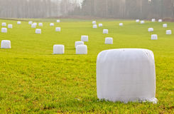 Straw bales wrapped in plastic Royalty Free Stock Photo