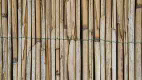 Texture from bamboo cane royalty free stock photography