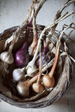 Straw basket with freshly harvested garlic and onions Stock Photos