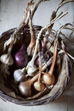 Straw basket with freshly harvested garlic and onions Royalty Free Stock Photo