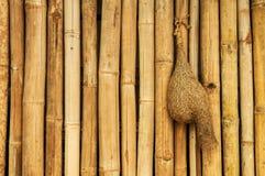 Straw bird nest on bamboo texture background. Old and grunge yellow bamboo texture background with bird nest made of straw stock image