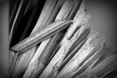 Straw black and white texture detail. Contrasted detail of a straws with one broken in black and white royalty free stock photography