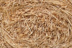 Straw briquette texture background. In farm field stock photography