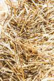 Straw close-up Stock Photography