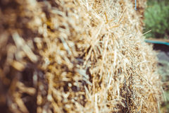 Close up of straw background texture. Straw close-up on a sunny day outside royalty free stock photo