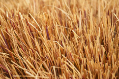 Straw. A close-up of straw for texture/background Royalty Free Stock Images