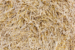 Straw closeup Stock Image