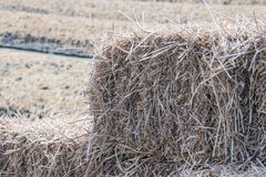 Straw closeup Stock Images