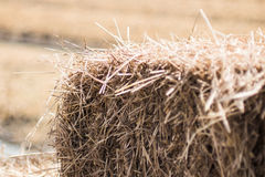 Straw closeup Royalty Free Stock Photography