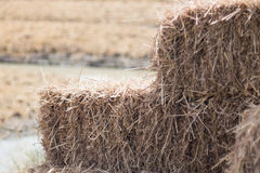 Straw closeup Royalty Free Stock Image