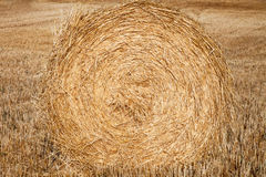 Straw crop Stock Images