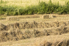 Straw cube Stock Images