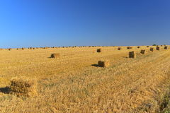 Straw cubes in a field Stock Images