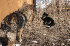 Straw dog and alley cat Royalty Free Stock Image