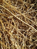 Straw. Dried out grass in a meadow Stock Photos